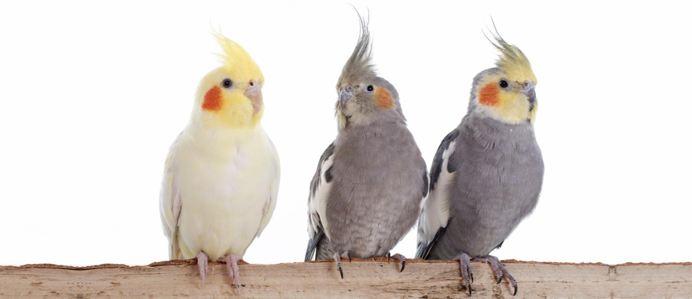 newport pets live birds